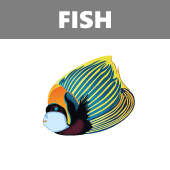 Fish in Spanish vocabulary crossword puzzle