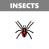 Insects in Spanish vocabulary crossword puzzle