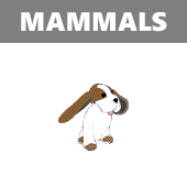 Mammals in Spanish vocabulary crossword puzzle